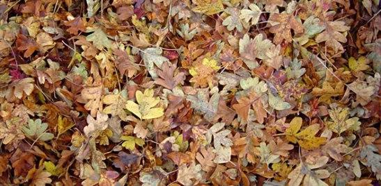leaf-mould